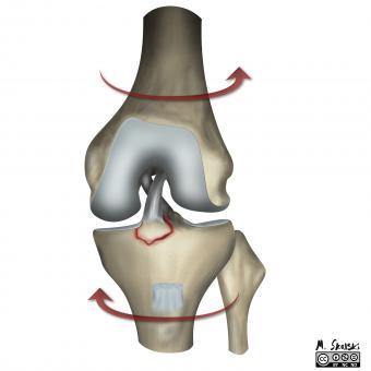 articulațiile cotului doare după exercițiu artrita articulației piciorului